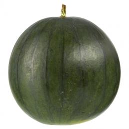 Wassermelone kernarm -...